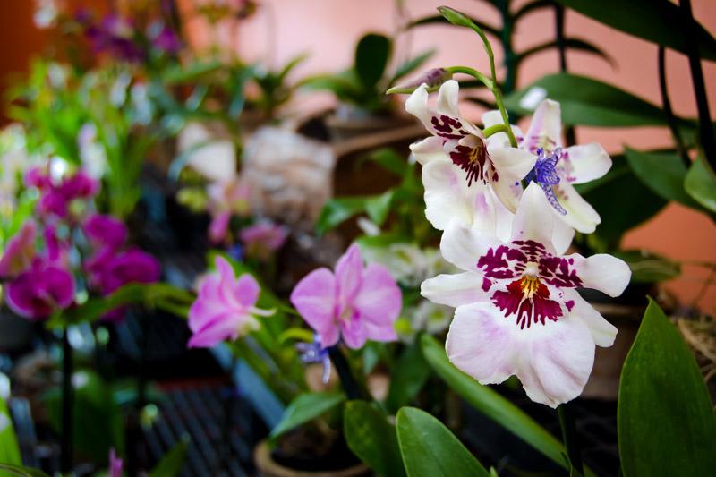Orchid Alley Kauai Kauai Grown Farmer Retailer Kauai